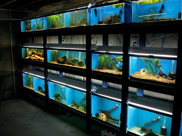Freshwater aquarium stores in toronto and surrounding for The fish store