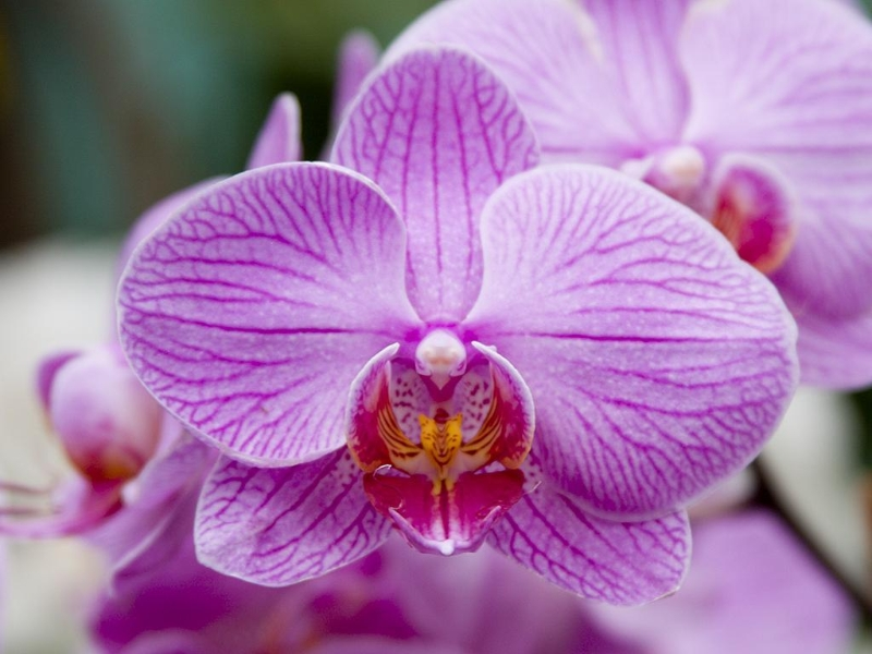 Ny Botanical Garden Orchid Show Review Infolific