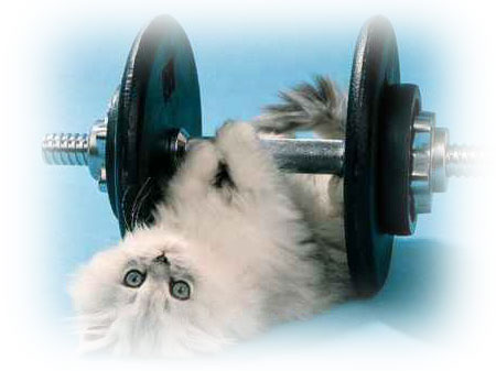 Kitten Exercising