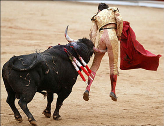 Bull Fighting Injury