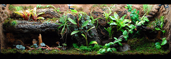 Terrarium with Many Plants