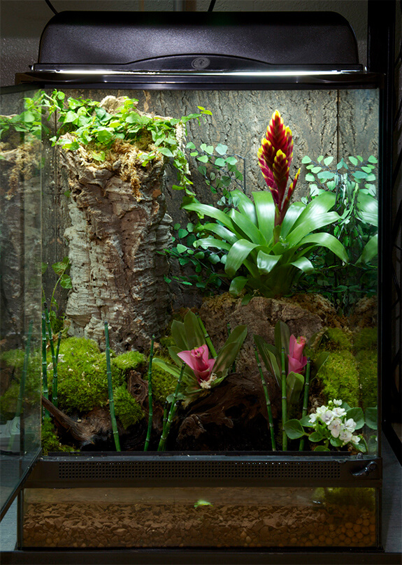 Lizard Terrarium Plants From Around The World Infolific