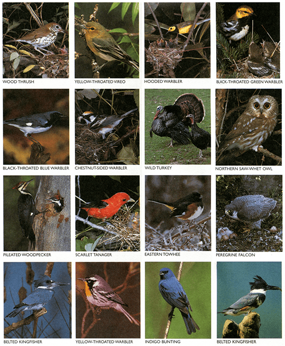 Birds of the Great Smoky Mountains