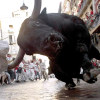 Bull Charges Camera