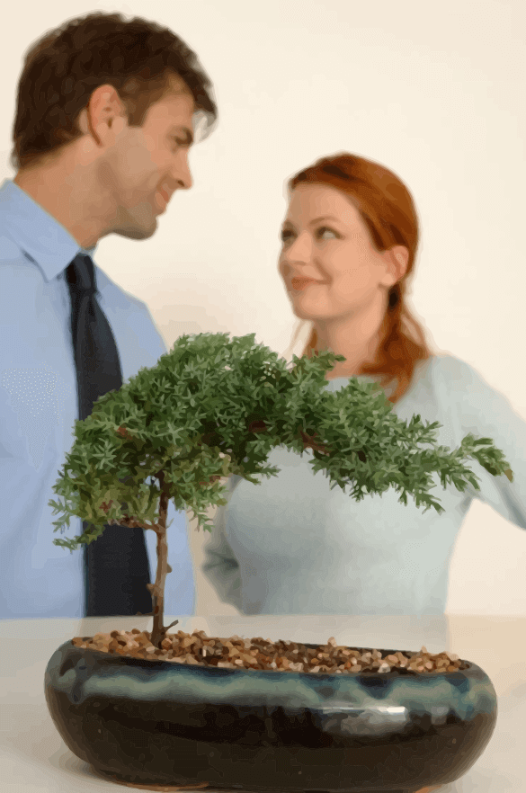 Couple with Bonsai