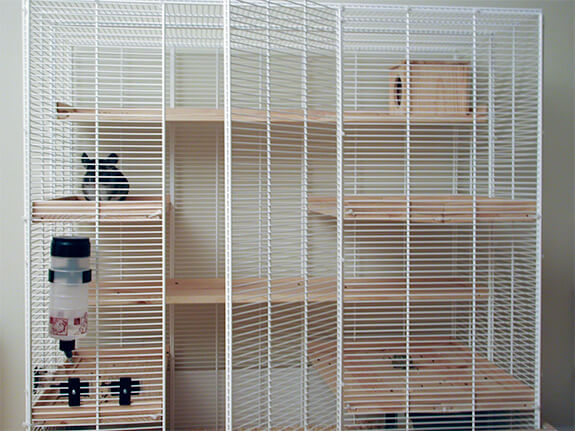 Chinchilla Cages | Infolific