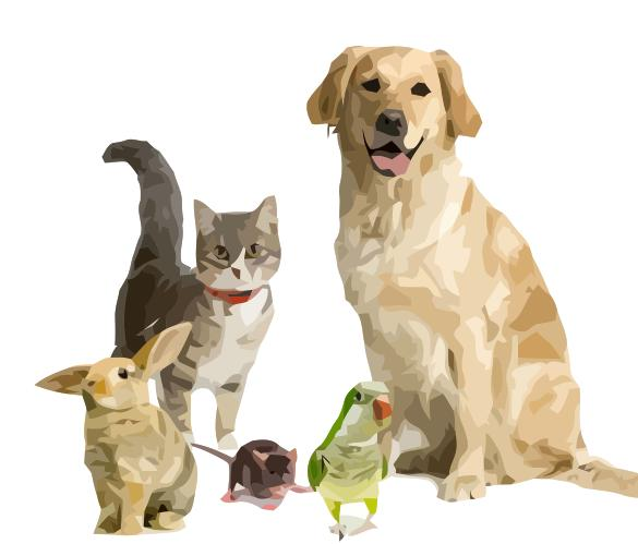 Insure multiple pets with us