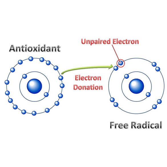 Antioxidant Donating Electron to Free Radical