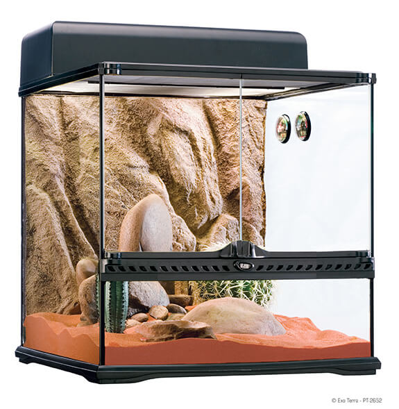 Desert Terrarium for Lizards