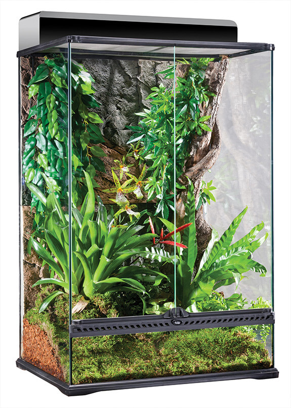 Pet Lizard Habitats The Rainforest Terrarium Infolific