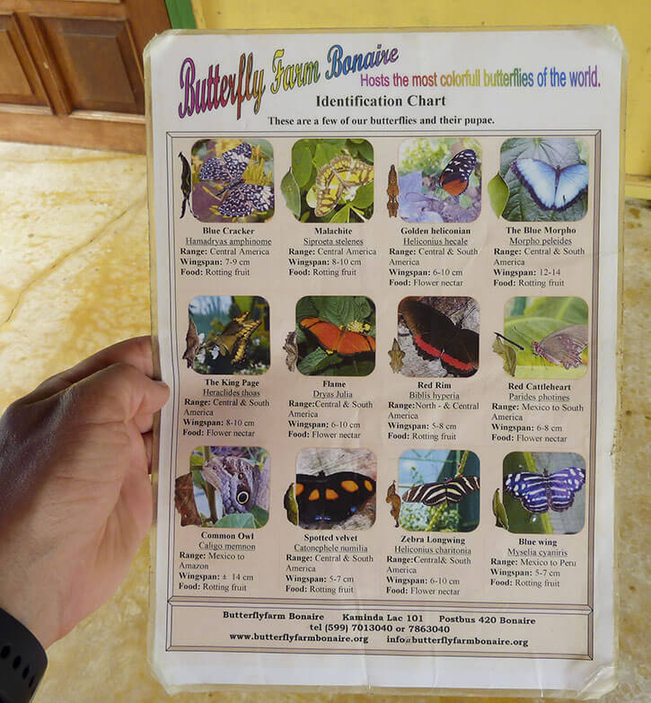 Bonaire Butterfly Farm Identification Sheet