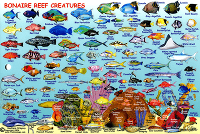 Bonaire Reef Fish and Creatures