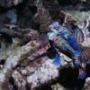 <a href='https://www.flickr.com/photos/sealifecameras/6893714654/sizes/l/'>see original</a>
